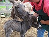 Spring is time for baby donkeys!